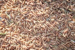 gros plan, de, riz séché