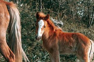 joli bébé cheval brun