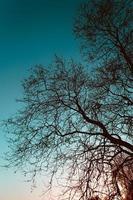 silhouettes d'arbres sur le ciel bleu