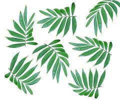 feuilles isolées sur fond blanc