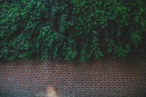 feuilles sur un mur de briques