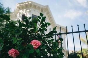 Sacramento, Californie, 2020 - fleurs devant une maison blanche photo