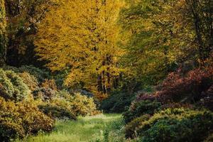 feuilles d'automne dans les bois