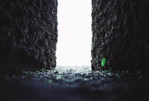 Ouverture en béton abstraite avec petite plante verte photo