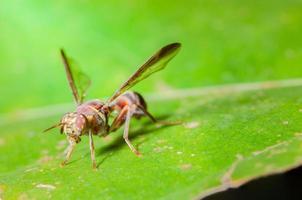 mouche des fruits sur une plante photo