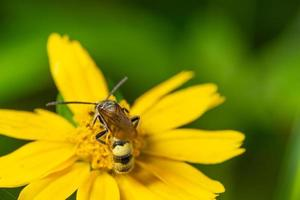 guêpe sur une fleur photo