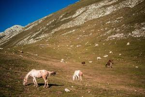 Troupeau de chevaux blancs et bruns sur champ d'herbe verte pendant la journée