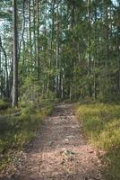 sentier pédestre dans la forêt photo