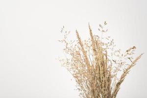herbe décorative brune
