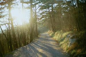 sentier entre les arbres pendant l'heure d'or