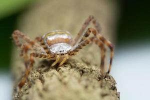 araignée sur l'arbre