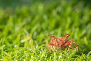 araignée sur l'herbe