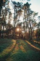 forêt pendant un coucher de soleil avec les ombres des arbres