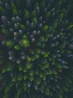 photographie aérienne de pins
