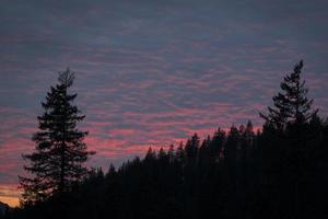 silhouette d'arbres au coucher du soleil