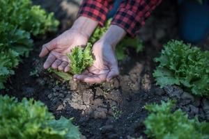 une femme plantant soigneusement des semis