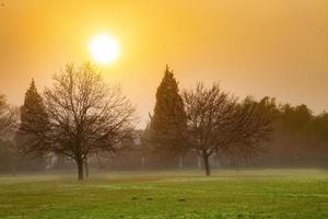 champ brumeux au coucher du soleil