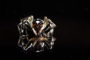 araignée sur la surface du verre