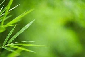fond de bambou vert