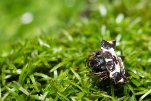 araignée dans l'herbe