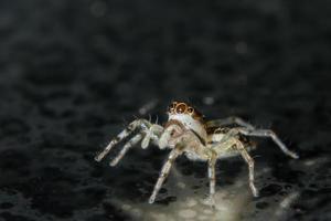 araignée sur la surface du verre photo