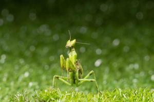 sauterelle dans l'herbe