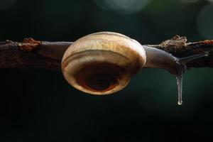 escargot sur une branche photo