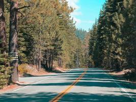 route avec des pins pendant la journée