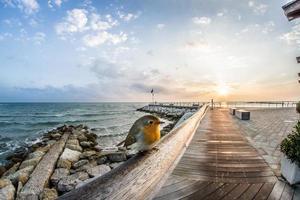 quai de plage en bois marron