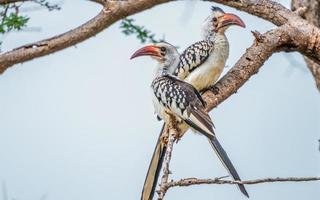 Deux oiseaux scintillants exotiques sur une branche d'arbre photo