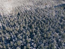 photographie aérienne d'arbres pendant la journée