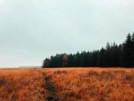 sentier dans un champ d'herbe