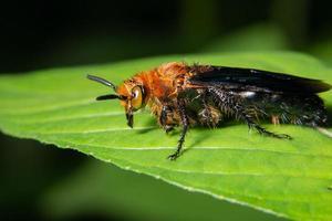 insecte sur une plante photo