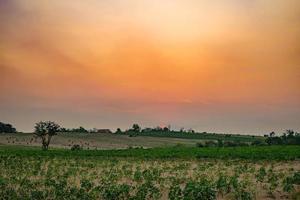 paysage au coucher du soleil photo