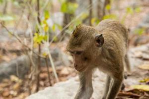 singe dans la forêt photo
