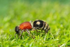 fourmi dans l'herbe photo