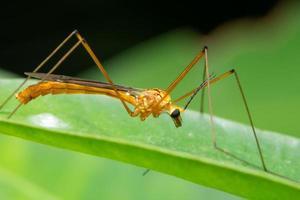 insecte sur une feuille, gros plan photo