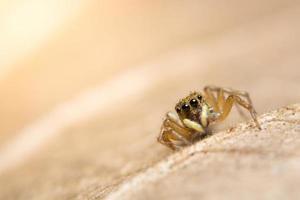 araignée sur une feuille sèche photo