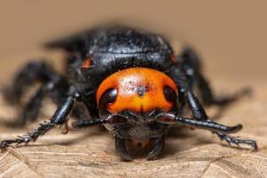 insecte sur feuille sèche photo