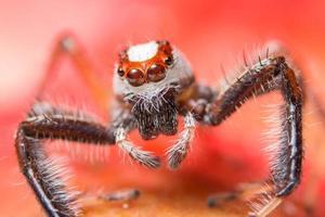 araignée sur une plante photo