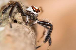 araignée sur un arbre photo