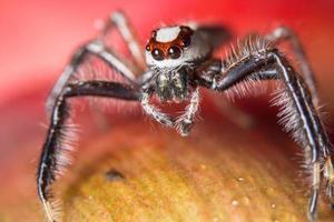 araignée sur une fleur photo