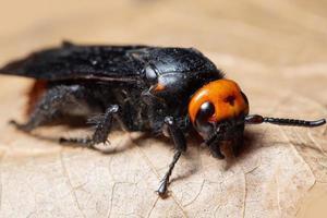insecte sur feuille sèche