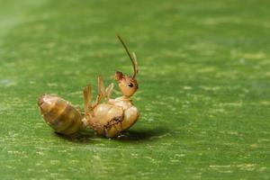 fourmi sur une feuille photo