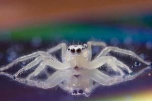 araignée sur une surface réfléchissante photo