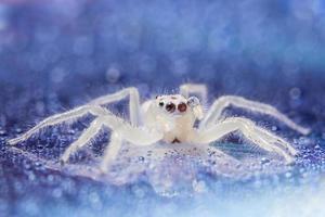 araignée avec des gouttelettes sur une surface réfléchissante photo