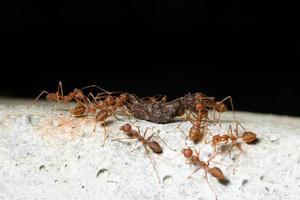 fourmis sur un rocher