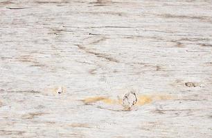 texture de grain de bois photo