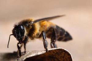 abeille sur une feuille