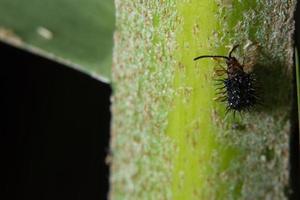 insecte sur une feuille photo